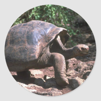 Giant Dome-Shaped Tortoise Walking Round Stickers