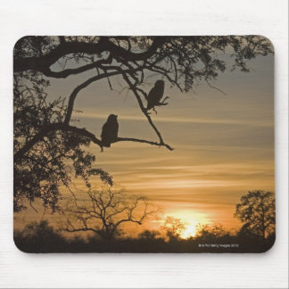 Giant Eagle Owls (Bubo lacteus) silhouetted at Mouse Pad