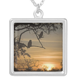 Giant Eagle Owls (Bubo lacteus) silhouetted at Silver Plated Necklace