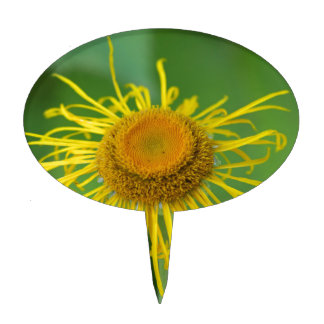 Giant Fleabane  (Inula magnifica) Cake Topper