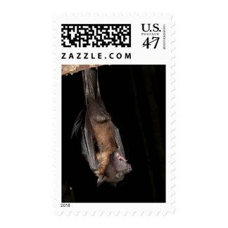 Giant Fruit Bat, Pteropus giganteus, from India Postage