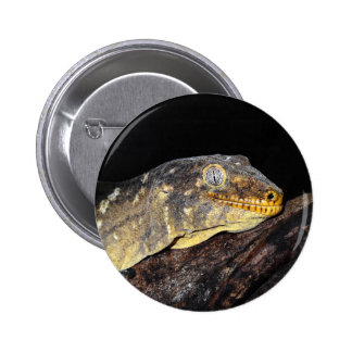 Giant geckos pinback button