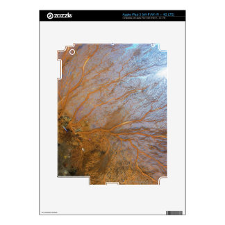 Giant gorgonian sea fan (Plexauridae sp.) iPad 3 Decal