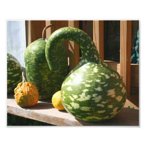 Giant Gourds 10x8 Nature Photo Art