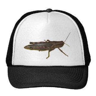 Giant Grasshopper Trucker Hat