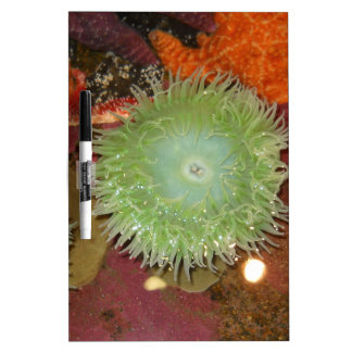 Giant Green Anemone Dry Erase Whiteboards