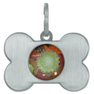 Giant Green Anemone Pet Tag