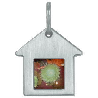 Giant Green Anemone Pet ID Tag