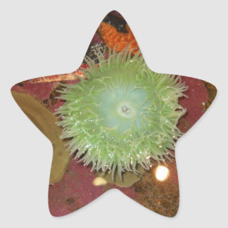 Giant Green Anemone Star Stickers