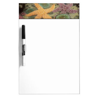 Giant green anemones and ochre sea stars dry erase boards