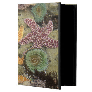 Giant green anemones and ochre sea stars iPad air case