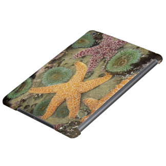 Giant green anemones and ochre sea stars iPad air cover