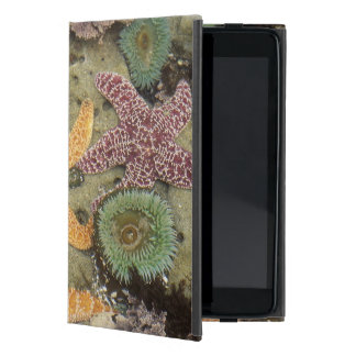 Giant green anemones and ochre sea stars iPad mini case