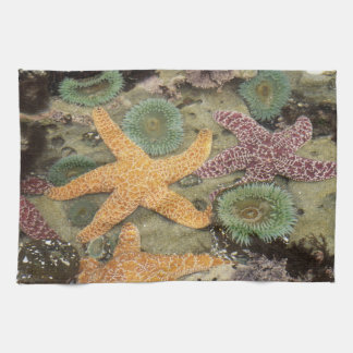 Giant green anemones and ochre sea stars kitchen towel