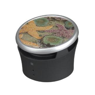 Giant green anemones and ochre sea stars speaker