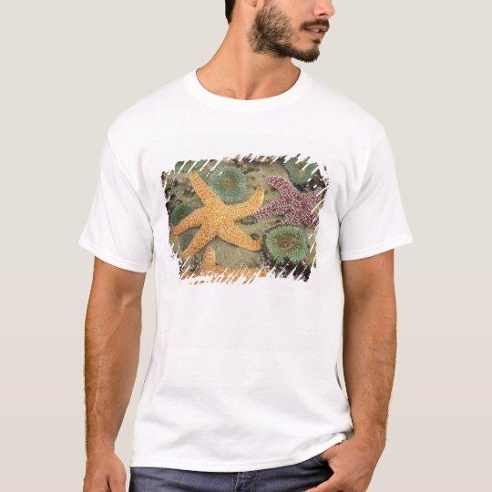 Giant green anemones and ochre sea stars T-Shirt