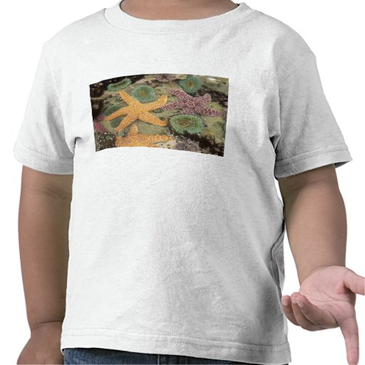 Giant green anemones and ochre sea stars tee shirts