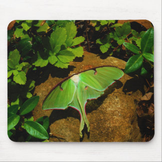 Giant Green Luna moth Mouse Pad