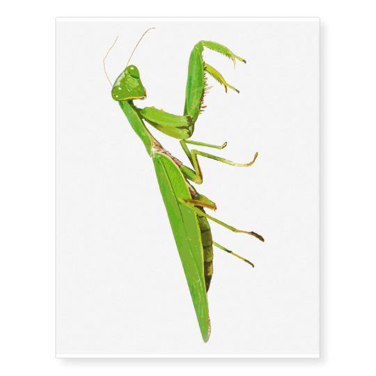 Giant Green Praying Mantis Temporary Tattoo Zazzle Com