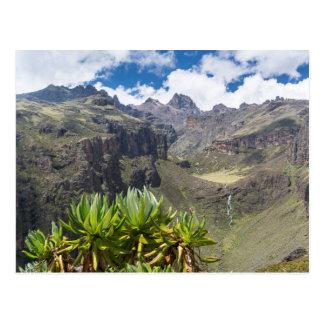 Giant Groundsel Or Dendrosenecio Postcard