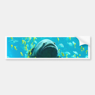 Giant Grouper freedom peace and calm Bumper Sticker