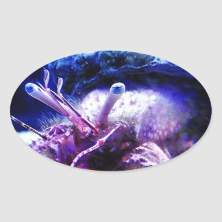 Giant Hermit Crab Oval Sticker