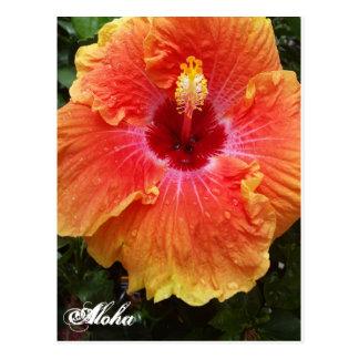 Giant Hibiscus Aloha postcard