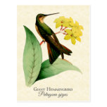 Giant Hummingbird Postcard