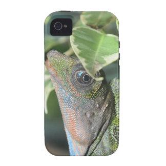 Giant Hump Headed Lizard Vibe iPhone 4 Case