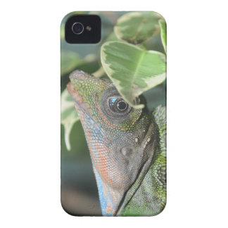 Giant Hump Headed Lizard Case-Mate iPhone 4 Cases