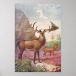 Giant Irish Deer Prehistoric Animals Antique Print
