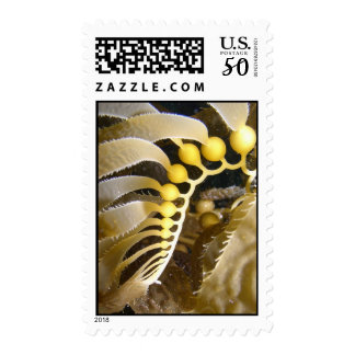 Giant Kelp Frond Postage