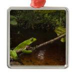 Giant leaf frog Phyllomedusa bicolor) 2 Metal Ornament