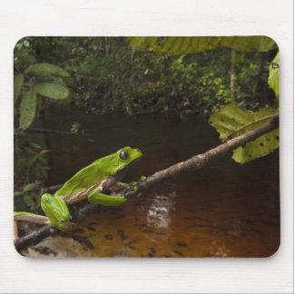 Giant leaf frog Phyllomedusa bicolor) 2 Mouse Pad