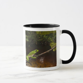 Giant leaf frog Phyllomedusa bicolor) 2 Mug