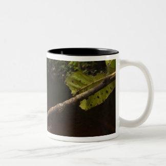 Giant leaf frog Phyllomedusa bicolor) 2 Two-Tone Coffee Mug