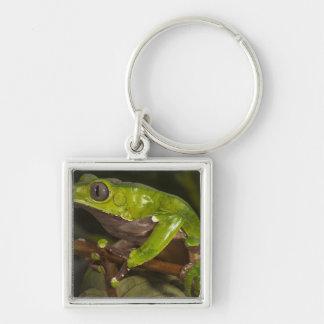 Giant leaf frog Phyllomedusa bicolor) 3 Keychains