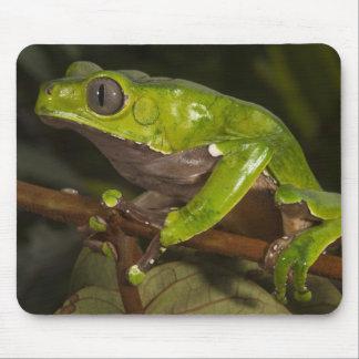 Giant leaf frog Phyllomedusa bicolor) 3 Mouse Pad