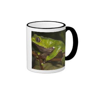 Giant leaf frog Phyllomedusa bicolor) 3 Coffee Mugs