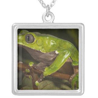 Giant leaf frog Phyllomedusa bicolor) 3 Silver Plated Necklace