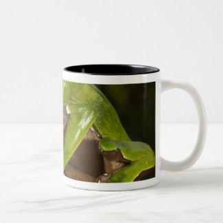 Giant leaf frog Phyllomedusa bicolor) 3 Two-Tone Coffee Mug