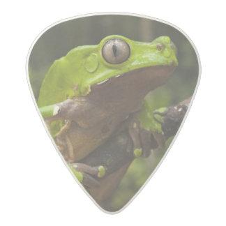 Giant leaf frog Phyllomedusa bicolor) Acetal Guitar Pick