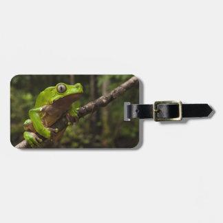 Giant leaf frog Phyllomedusa bicolor) Bag Tag