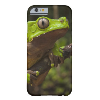 Giant leaf frog Phyllomedusa bicolor) Barely There iPhone 6 Case