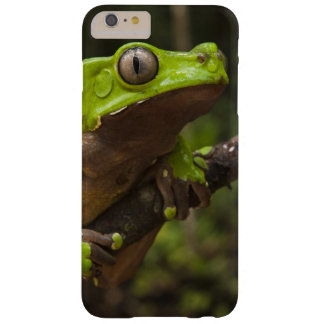 Giant leaf frog Phyllomedusa bicolor) Barely There iPhone 6 Plus Case