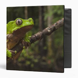 Giant leaf frog Phyllomedusa bicolor) Binders