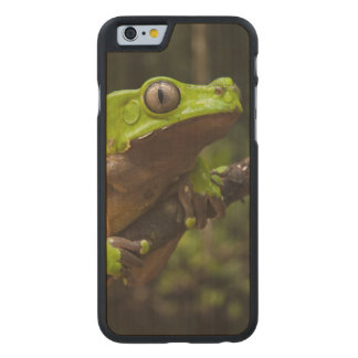 Giant leaf frog Phyllomedusa bicolor) Carved® Maple iPhone 6 Slim Case