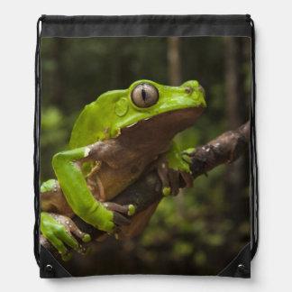 Giant leaf frog Phyllomedusa bicolor) Drawstring Backpack