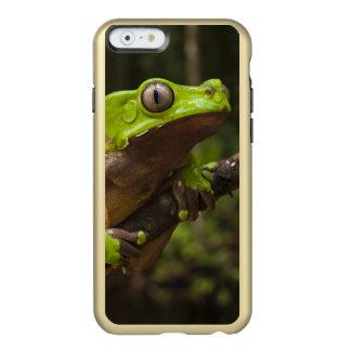 Giant leaf frog Phyllomedusa bicolor) Incipio Feather® Shine iPhone 6 Case