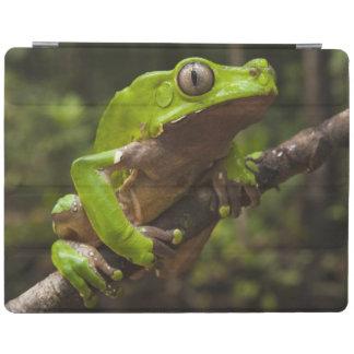 Giant leaf frog Phyllomedusa bicolor) iPad Smart Cover
